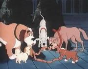 puppys-22